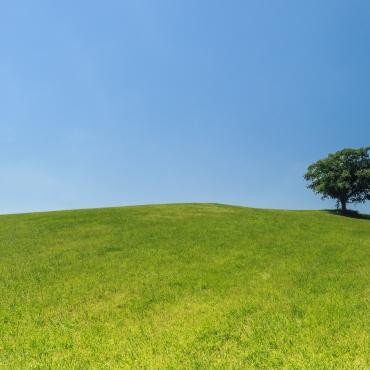 hill-meadow-tree-green