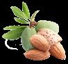 huile-vegetale-amande-douce-bio-1